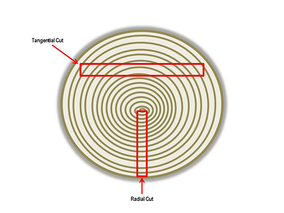 Diagram Tangential and Radial Cuts, 2015,Courtesy of The Strong, Rochester, New York